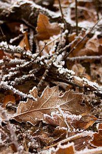 Close-up van winters tafereel van