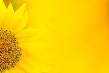Sonnenblume von Luuk Belgers