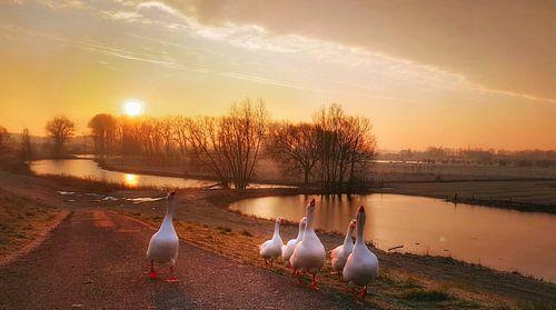 Sunny geese van Joyce Derksen