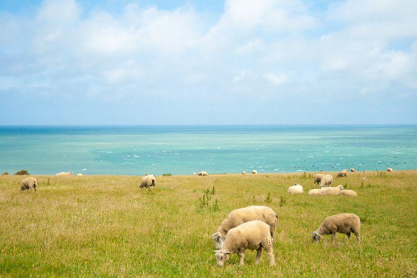 schapen met zicht op zee van Marcel Derweduwen