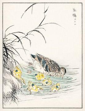 Ente mit Küken Illustration aus von Numata Kashu (1838-1901). von Studio POPPY
