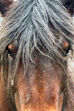 Pferdekopf von Christophe Fruyt