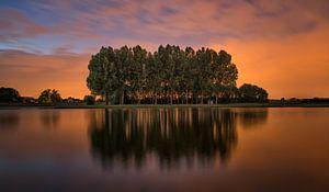 Bomen bij oranje lucht van