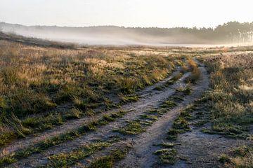 Heide met nevel van Nancy Lamers
