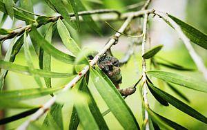 Chamäleon zwischen Blättern