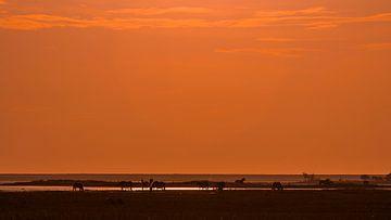 Konik-Pferde im Nationalpark Lauwersmeer von Guus van der Linde