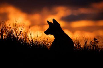Vossenwelp zonsondergang van Isabel van Veen