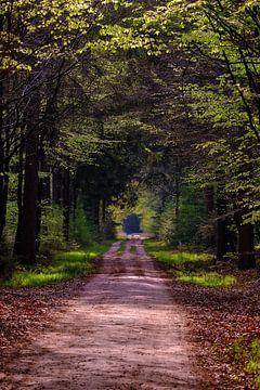 Doorkijkje bos van Erik Koole