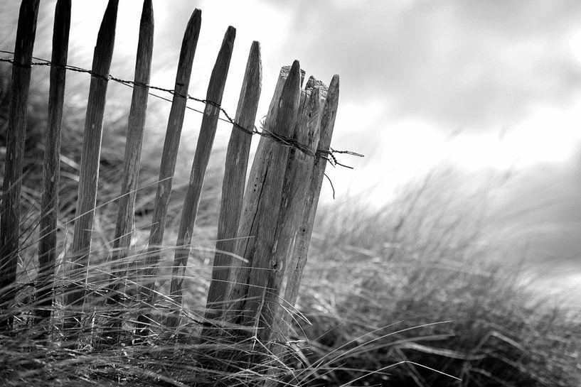 Duinen, Nederlandse kust (zwart-wit) van Rob Blok