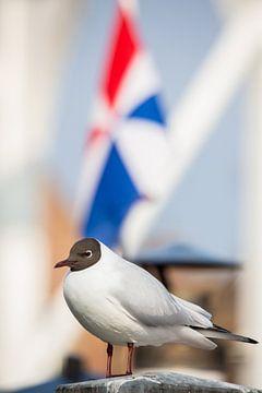 Vögel | Lachmöwe für eine Flagge - Hafen von Enkhuizen von Servan Ott