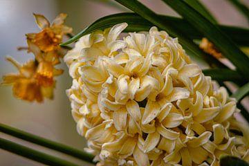 Blume von Johnny Flash
