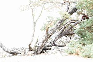 Liggende boom van