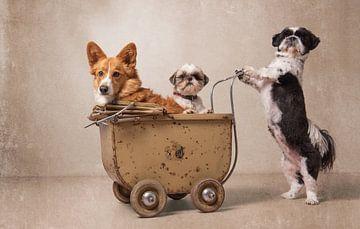 Hondenfamilie, Shih tzu en Gorki van Wendy van Kuler