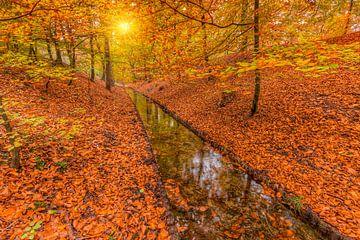 Herbstfarben an einem Bach im Wald bei Sonnenuntergang von Rob Kints