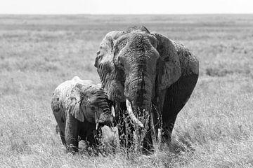 Auf Safari in Afrika: Elefantenmutter mit Jungen in der Serengeti-Ebene (schwarz-weiß) von Koolspix