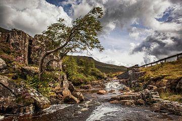 Fluss Coe von Rob Boon