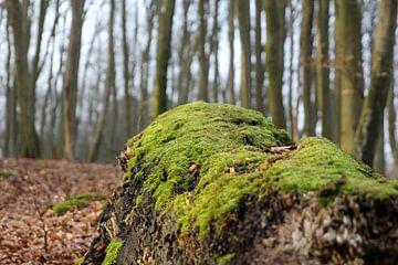 Met mos bedekte boom van Florian Kampes