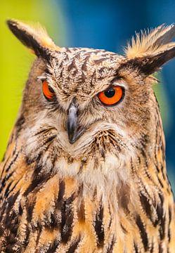 Uil,Owl van