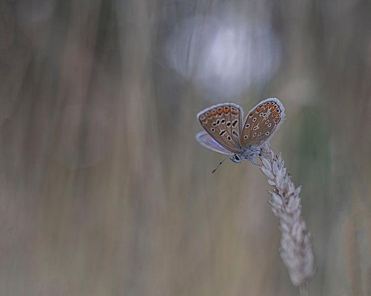 Icarusblauwtje van Esther Bakker-van Aalderen