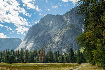 Yosemite National Park von Tashina van Zwam