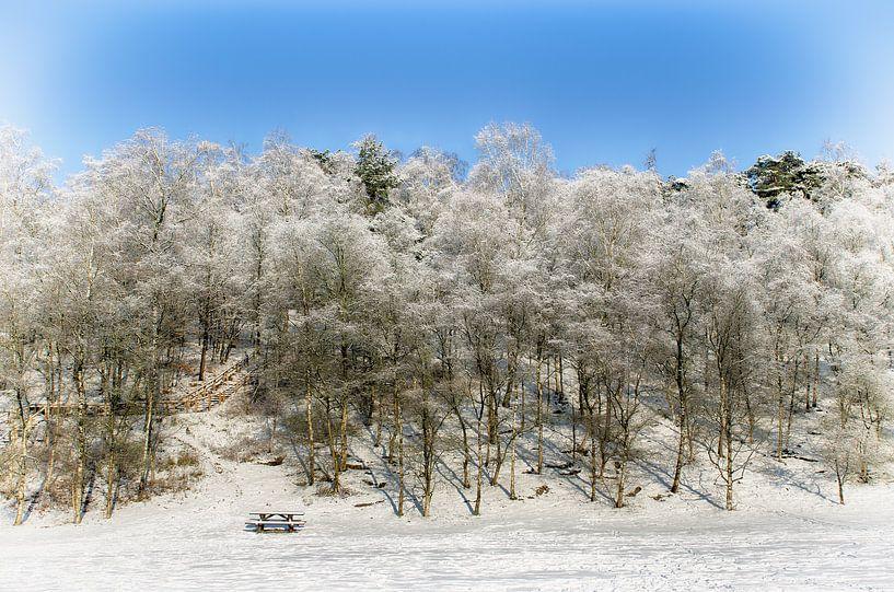 Besneeuwde bomen van Mark Bolijn