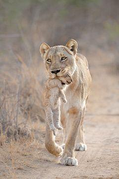 Mutterliebe einer Löwin von