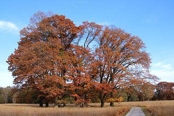 Herfst sur Hans van Otterloo