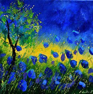 Blauwe klaprozen 44