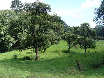 Weide en bos van David Van der Cruyssen