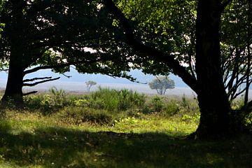 Ein Blick auf die Heide von Gerard de Zwaan