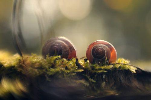 Macro - Duo slak
