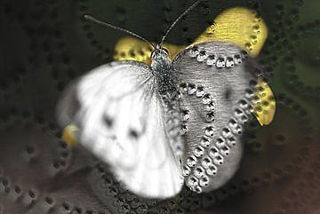 Butterfly van David Pichler