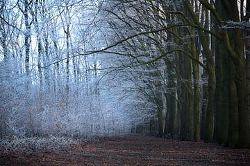 Winter in het bos van Cilia Brandts