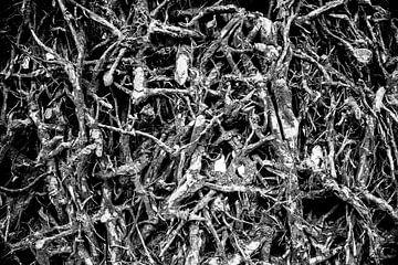 Boomwortels  von RNK Fotografie