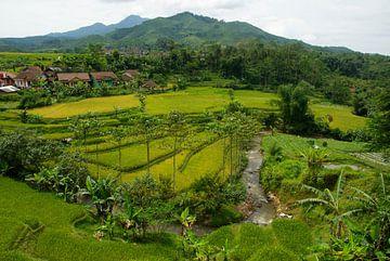 Rijstvelden Java Indonesië  von Irene Colen