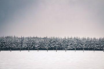 Winterlandschaft mit schneebedeckten Kiefern im Hohen Venn von Daan Duvillier