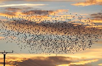 Vogelzug am Abendhimmel von Heike Hultsch