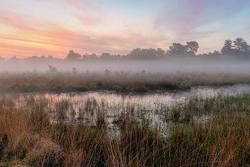 Klein Hasselsven in de mist van Wendy Nooijen