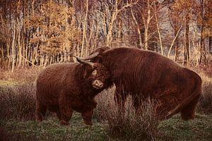 Fighting Bulls