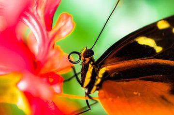 Vlinder van Bart van Woudenberg