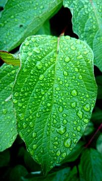 Groene bladeren met regendrupels van Digital Fun