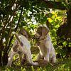 Klein geheim van Mogi Hondenfotografie thumbnail