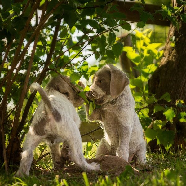 Klein geheim van Mogi Hondenfotografie