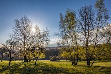 Erste Sonnenstrahlen über dem Taunuswald sur Christian Müringer