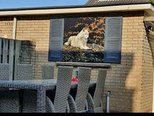 Klantfoto: Wolf in de herfst van Patrick van Bakkum, op canvas