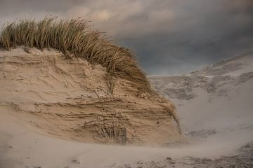 Sand dunes in Schoorl, Netherlands sur Leon Doorn