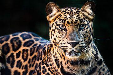 In den Augen des Panthers von Kris Christiaens