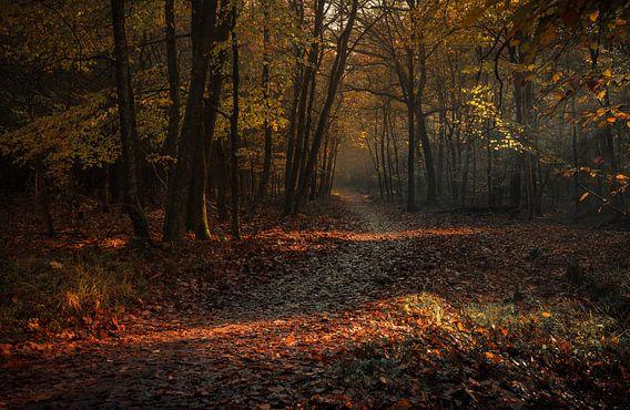 Volg het pad van mysterie van Joris Pannemans - Loris Photography