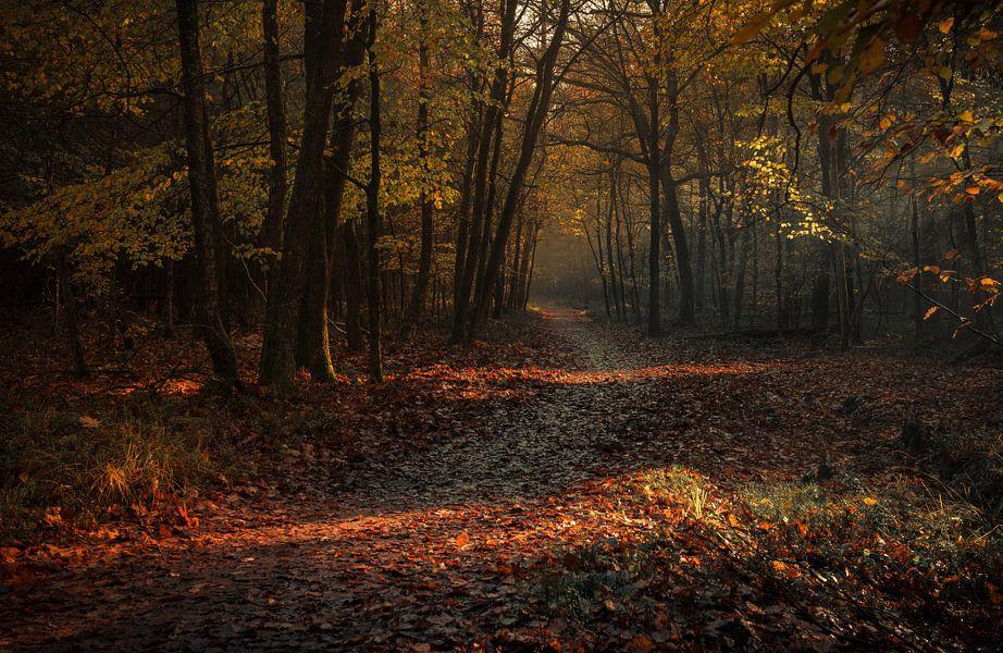 Volg het pad van mysterie