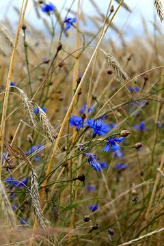 Little bit of Blue van Tanja Huizinga Fotografie